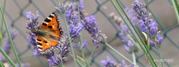 . « Le bonheur est comme un papillon : il vole sans jamais regarder en arrière. »  34
