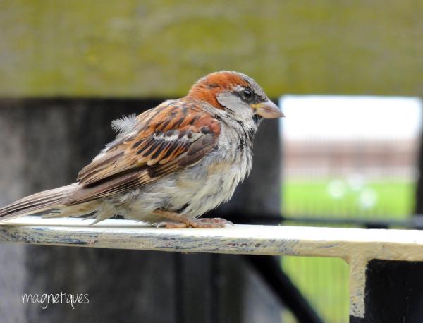 . « La différence qu'il y a entre les oiseaux et les hommes politiques, c'est que de temps en temps les oiseaux s'arrêtent de voler ! »  36