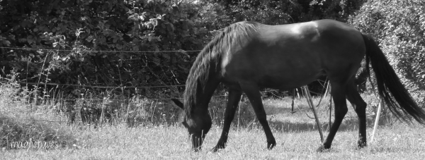 . « Le cheval court, le cavalier se vante. »  37