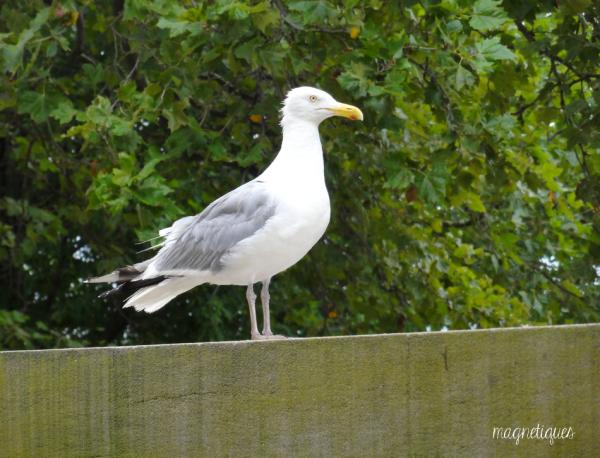 . « Je ne suis ni l'aile droite ni l'aile gauche. Je suis l'oiseau. »  43
