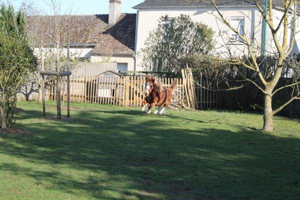 Le cheval idéal n'est pas le cheval parfait, c'est juste celui dont on n'aime tout, même ses défauts.