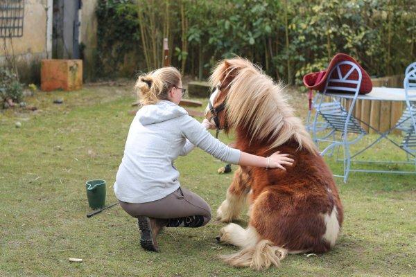 Un cheval ne nous appartient pas. La seule chose que nous possédons, c'est le devoir de nous en occuper correctement...