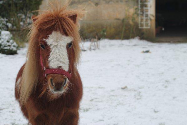 Petit poney ..
