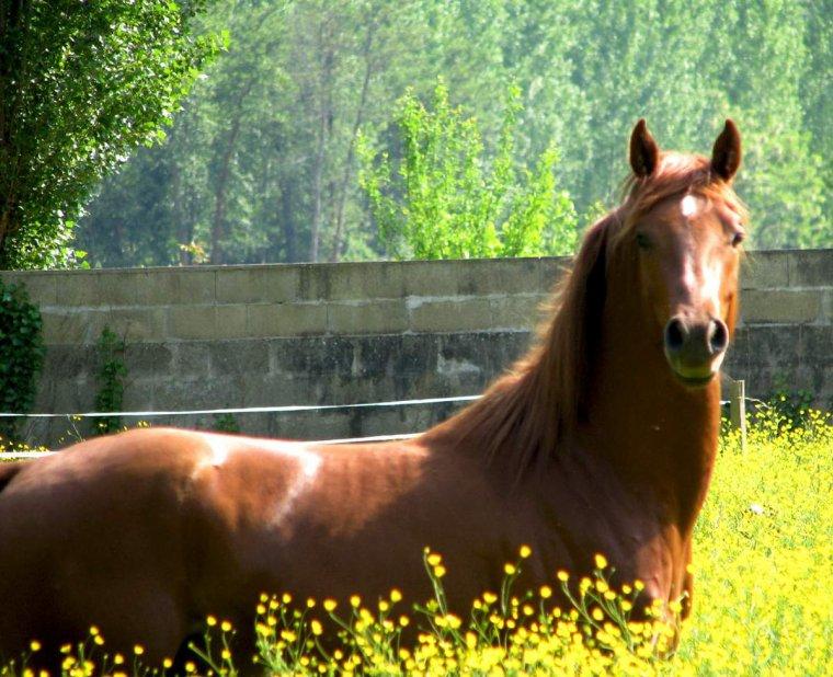 saison 1 episode 3 : le nouveau cheval