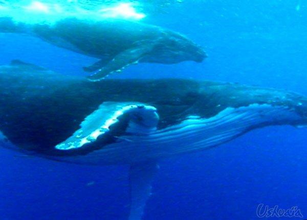 baleine pour le panda ^^