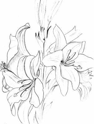 Ma serie de fleurs mes dessins mes peintures et ma vision de - Dessin fleur de lys ...