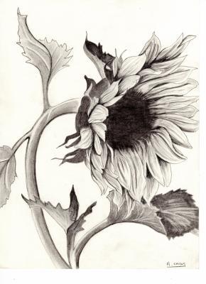 ma serie de fleurs mes dessins mes peintures et ma vision de. Black Bedroom Furniture Sets. Home Design Ideas
