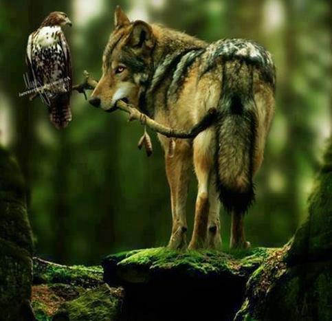 allez chez phill merci pour lui    bipez    ici http://swolfs3.skyrock.com/