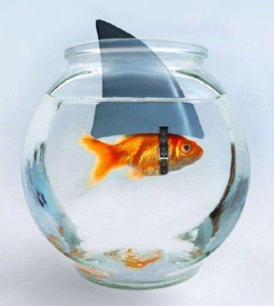je suis seul dans mon bocal !!! pffff bad sur bad jen et mar !!