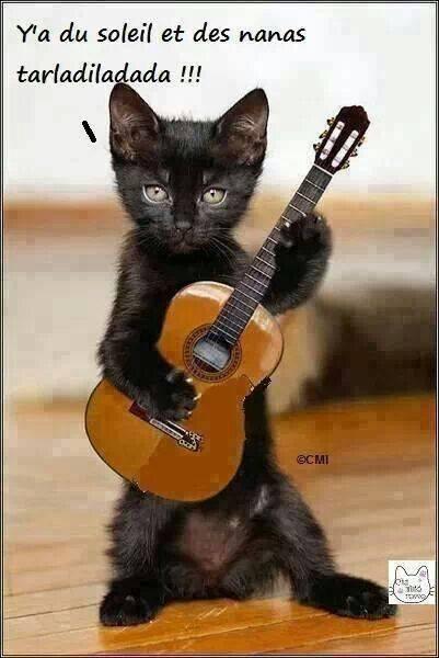 """Résultat de recherche d'images pour """"chat humour ordinateur"""""""