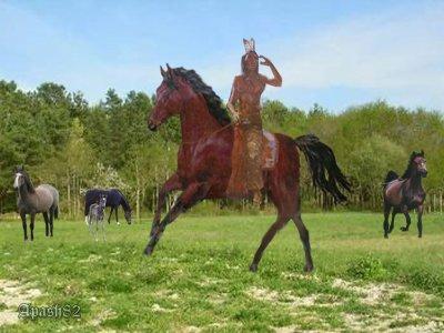 ( le  gardien des chevaux)