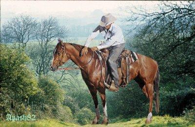 coboy sur son cheval vous souhaite une agréable soirée et une douce nuit mes amis(es)