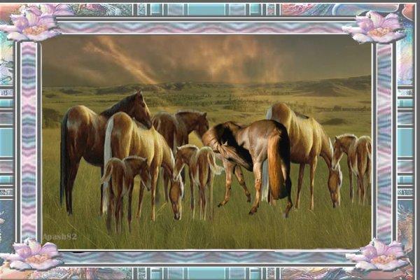 le cadre des chevaux dans la Prairie.--bon après midi mes amis(es)