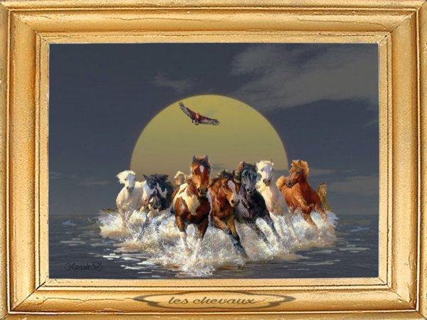 voila un jolie cadre des chevaux sauvage blog de apash2010. Black Bedroom Furniture Sets. Home Design Ideas