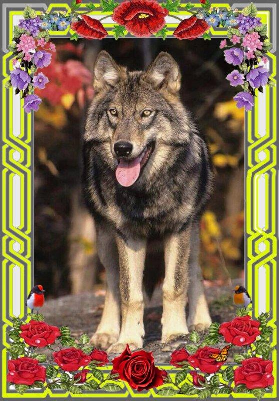 une carte du loup pour vous souhaiter un belle après midi à  tous