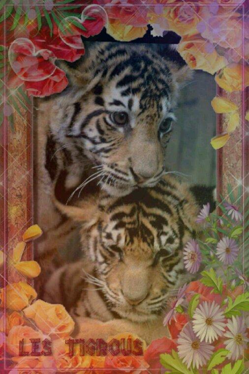 Nos amis tigres il sont à deau râble