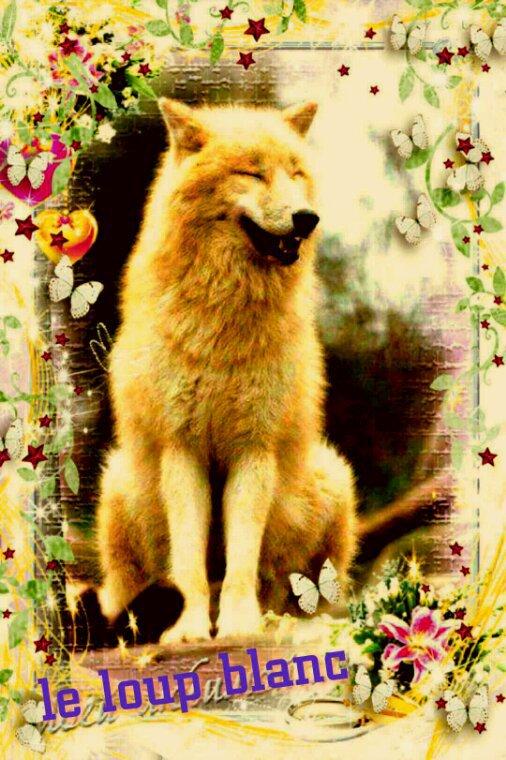 Le loup  l'ami des indiens