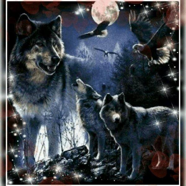 □◇  les loups  ◇□