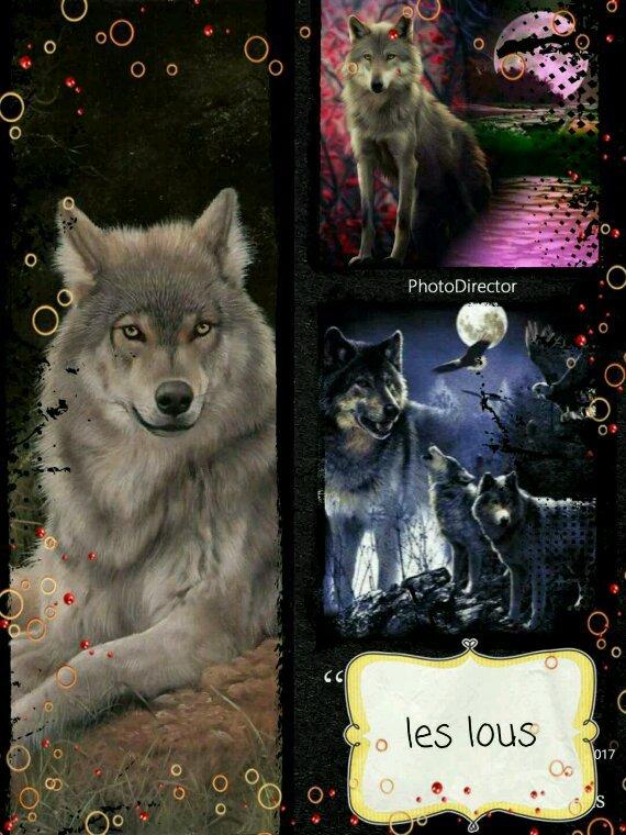 Les loups son des bêtes formidable