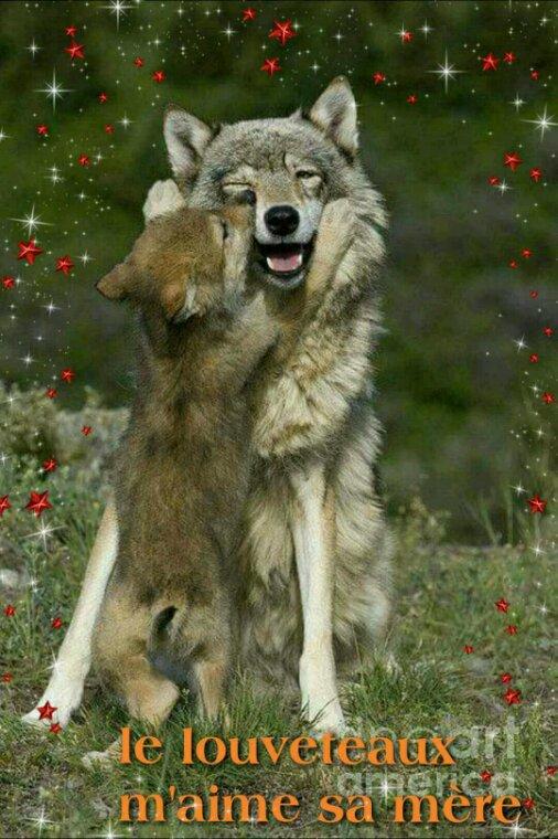 ■ ♡ l'amour• Le louveteaux aime sa mère ♡ ■