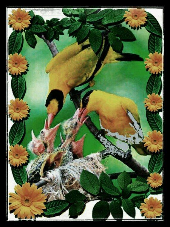La famille oiseaux du bonheur