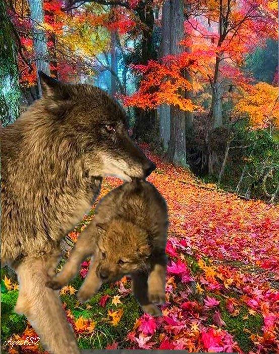 voila la louve et son petit