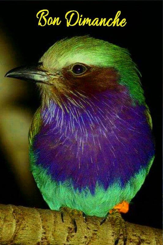 l'oiseaux du bonheur bon Dimanche a tous