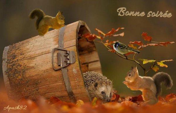 Bonne soirée à tous avec des couleur d'automne