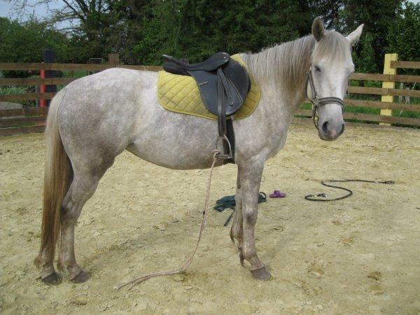 mettre un cheval à la selle, il y a un an...C'était le soleil...
