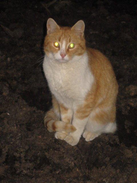 un de mes chats, la nuit