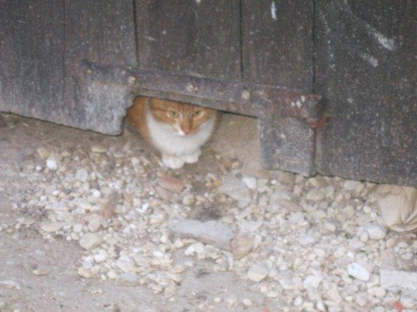 chat guetteur