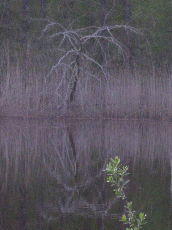Arbre au bord de l'étang