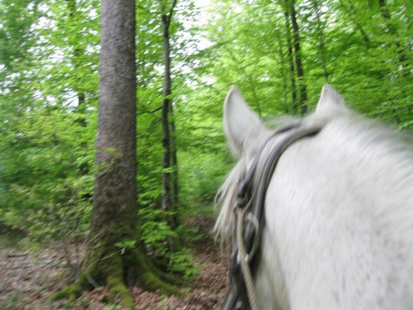 A cheval ds les bois