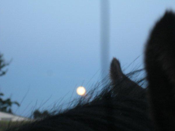 Apollon,Tima la Lune et moi