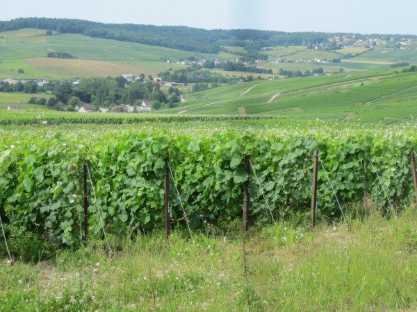 Le vignoble Champenois