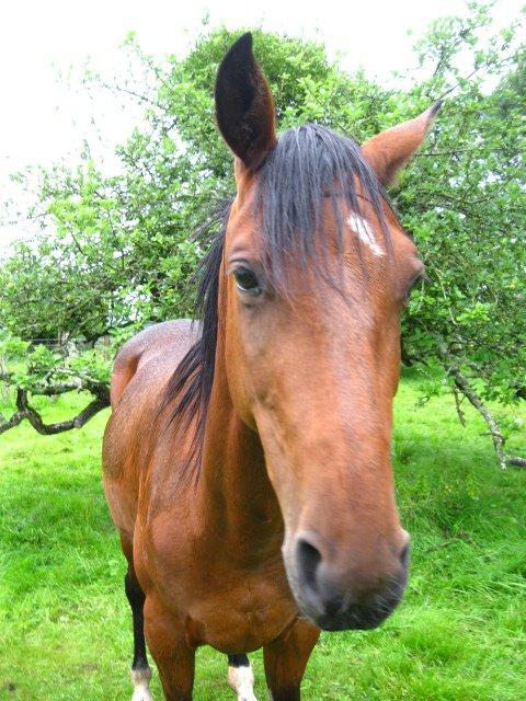 Qu'est-ce que l'éducation du cheval?
