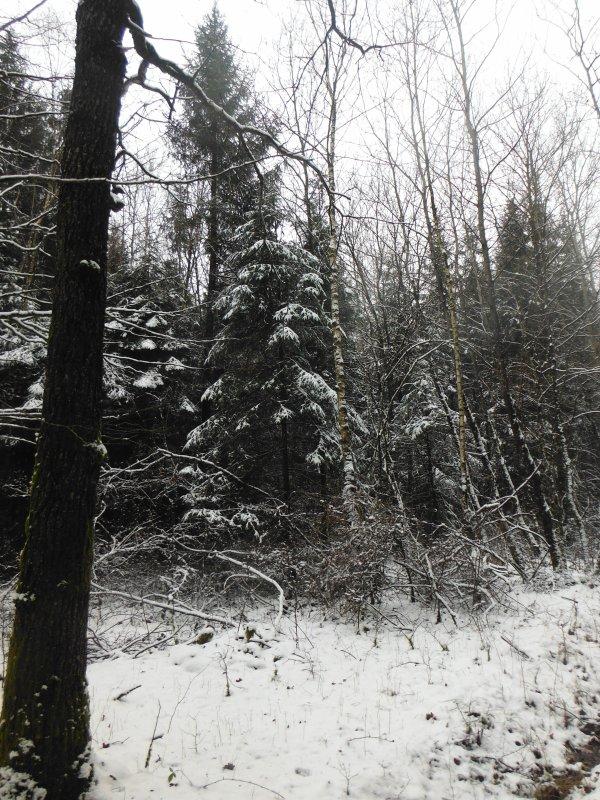 photos de la promenade jour de neige en Argonne