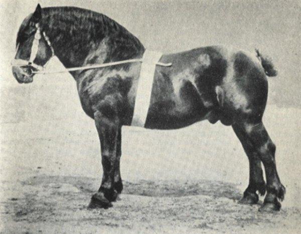 Les chevaux de trait ont encore leur utilité
