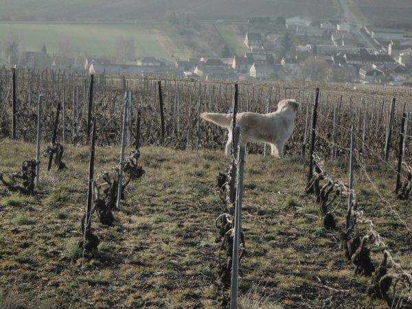 De la Champagne à l'Argonne...