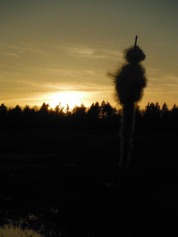 Dune lors de la promenade en Argonne...