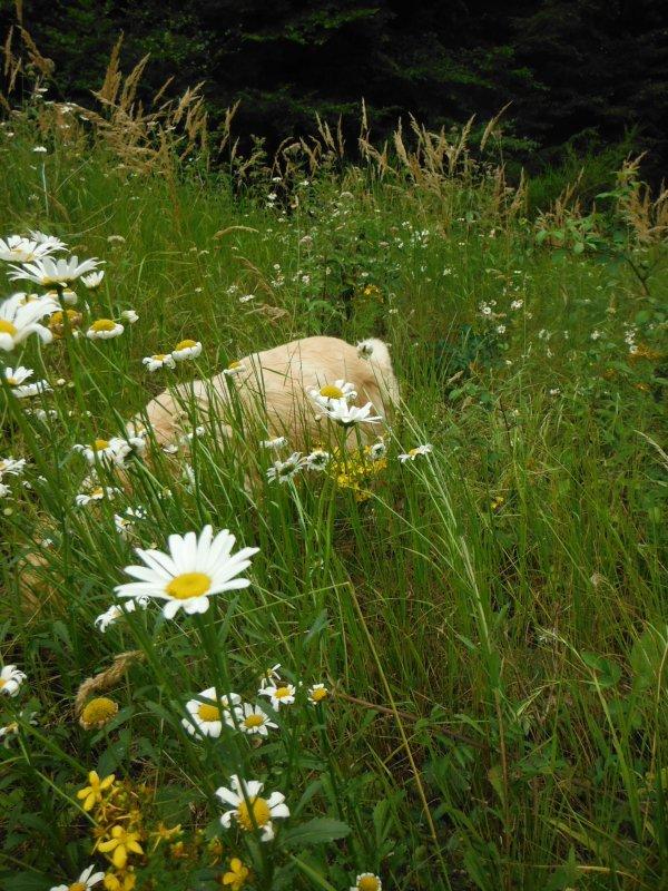 Couleurs de fleurs d'Argonne...