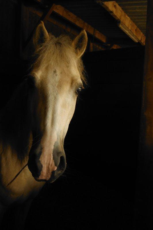 Réflexions autour du cheval