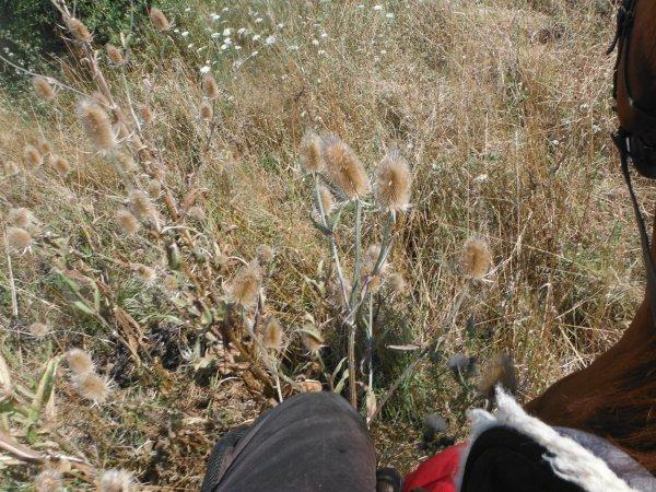 Bruissements d'herbes...