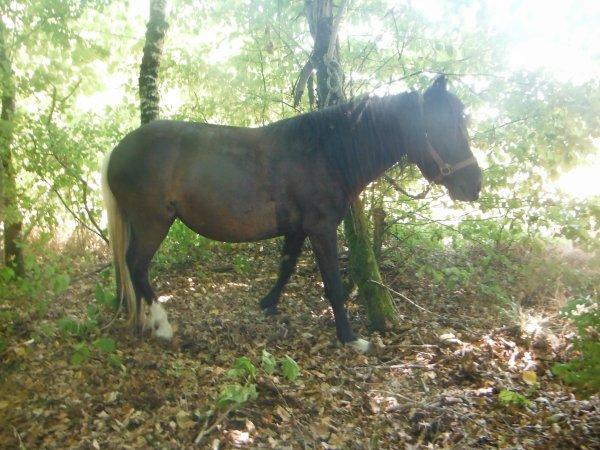 Un cheval, une pensée...^^