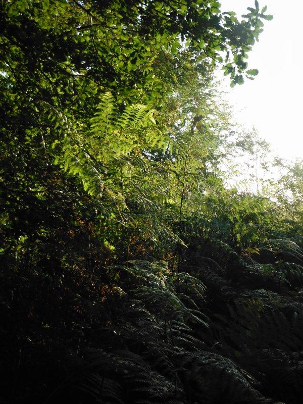 tour en forêt...