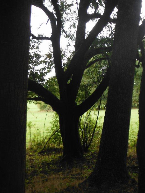 tour en forêt suite...