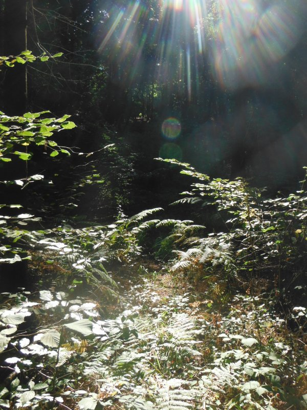 Nature en Argonne..