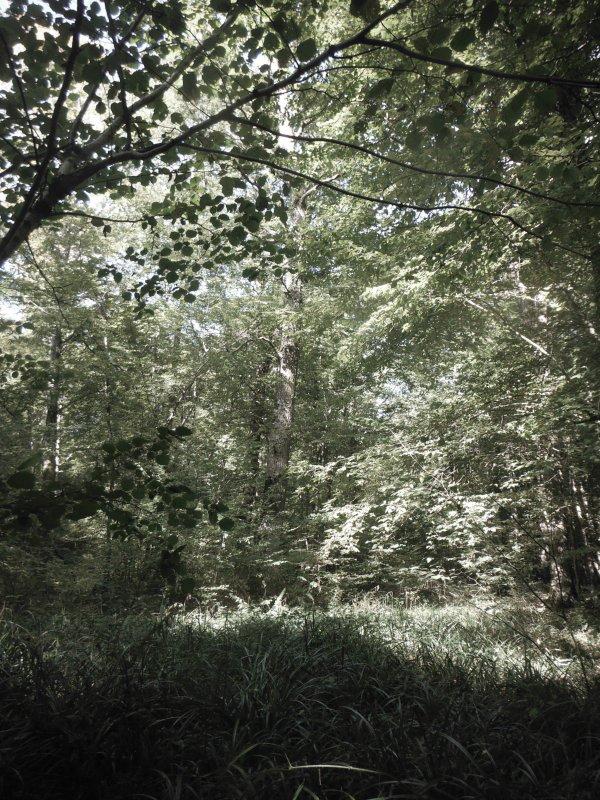 nature en Argonne...