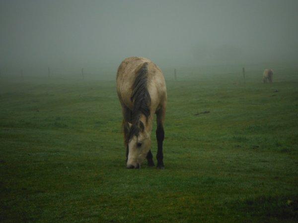 Portraits sous la brume, suite...