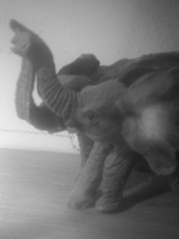 Gard: une vidéo choc dévoile des mauvais traitements sur les animaux dans l'abattoir du Vigan
